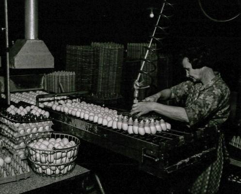 12-Josie-Lewis-vacuum-eggs