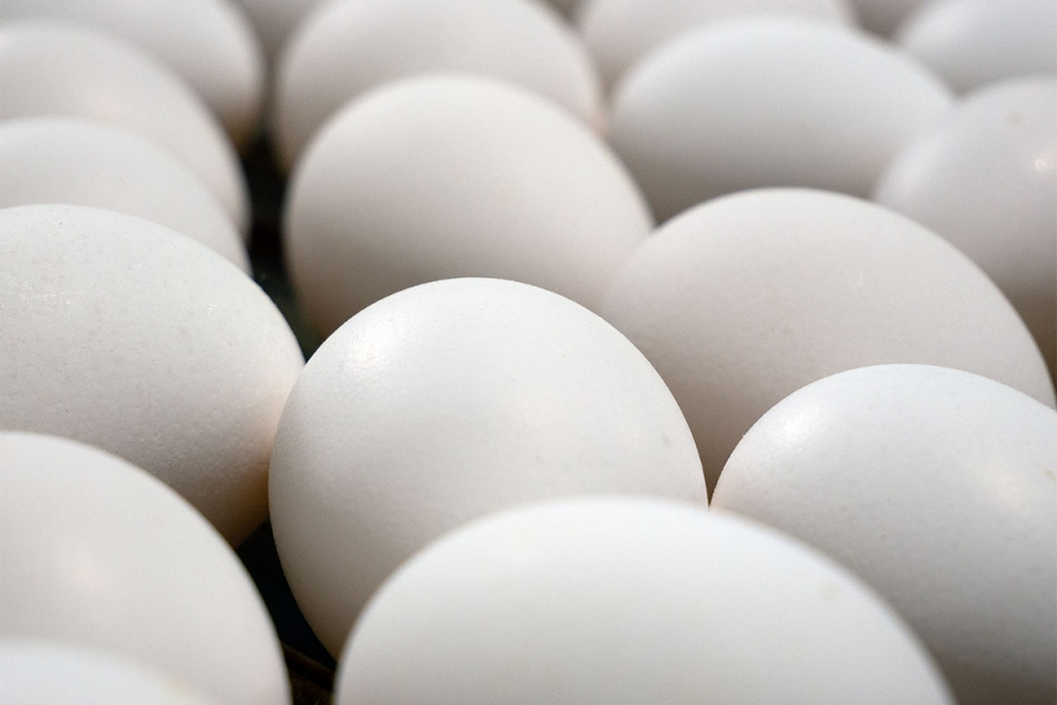 Traditional White Eggs
